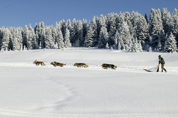 Photo of Husky dog sleigh ride